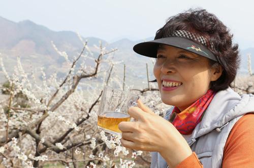반승환 씨의 부인 강경녀 씨. 매화밭을 배경으로 매실즙을 마시며 활짝 웃고 있다.