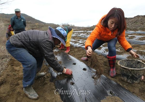 산골로 귀촌한 두루 씨가 8일 오후 경상북도 청송군 신기리 야산에서 지역 어르신들과 함께 산나물을 심고 있다.