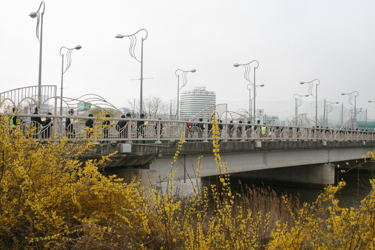 노란 4월 속초 청소년 행렬이 청초교를 지나고 있다.