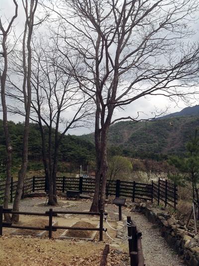 연리지 뿌리가 다른 나무의 가지가 하나로 합쳐진 현상의 연리지