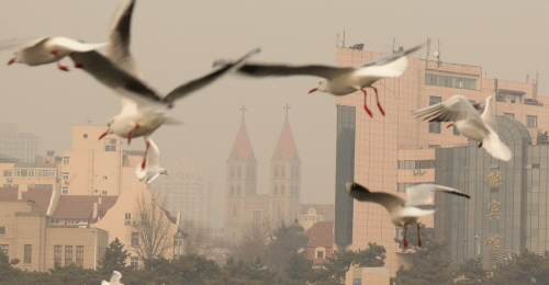 유럽의 어제와 중국의 오늘이 어우러진 칭다오 칭다오 잔교에서 바로본 천주교 성당의 모습 위로 갈매기가 난다