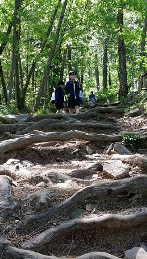 다산초당 가는 길 다산초당으로 올라가는 길목의 나무뿌리로 된 자연 계단이다. 다산도 이 계단을 오르내렸을 것이고, 정호승 시인도 이 계단을 오르내린 뒤에 '뿌리의 길'을 썼을 것이다.