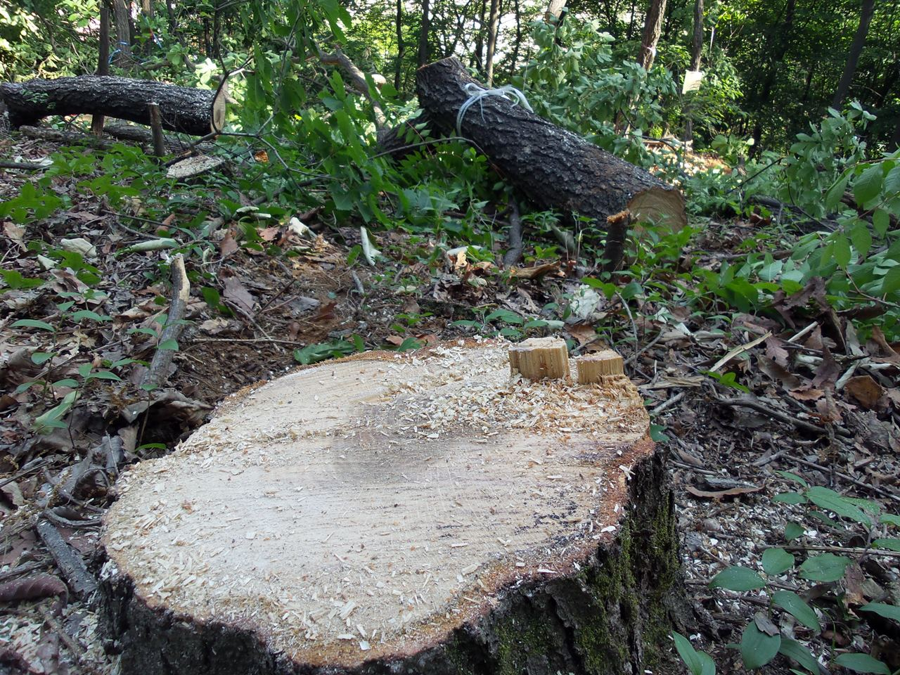 초등학생들이 숲체험을 오르는 학교 앞 숲의 나무들이 잘려나갔다. 학부모들과 학생들이 더 이상의 숲 파괴를 막고자 등교 거부를 시작한 것이다.