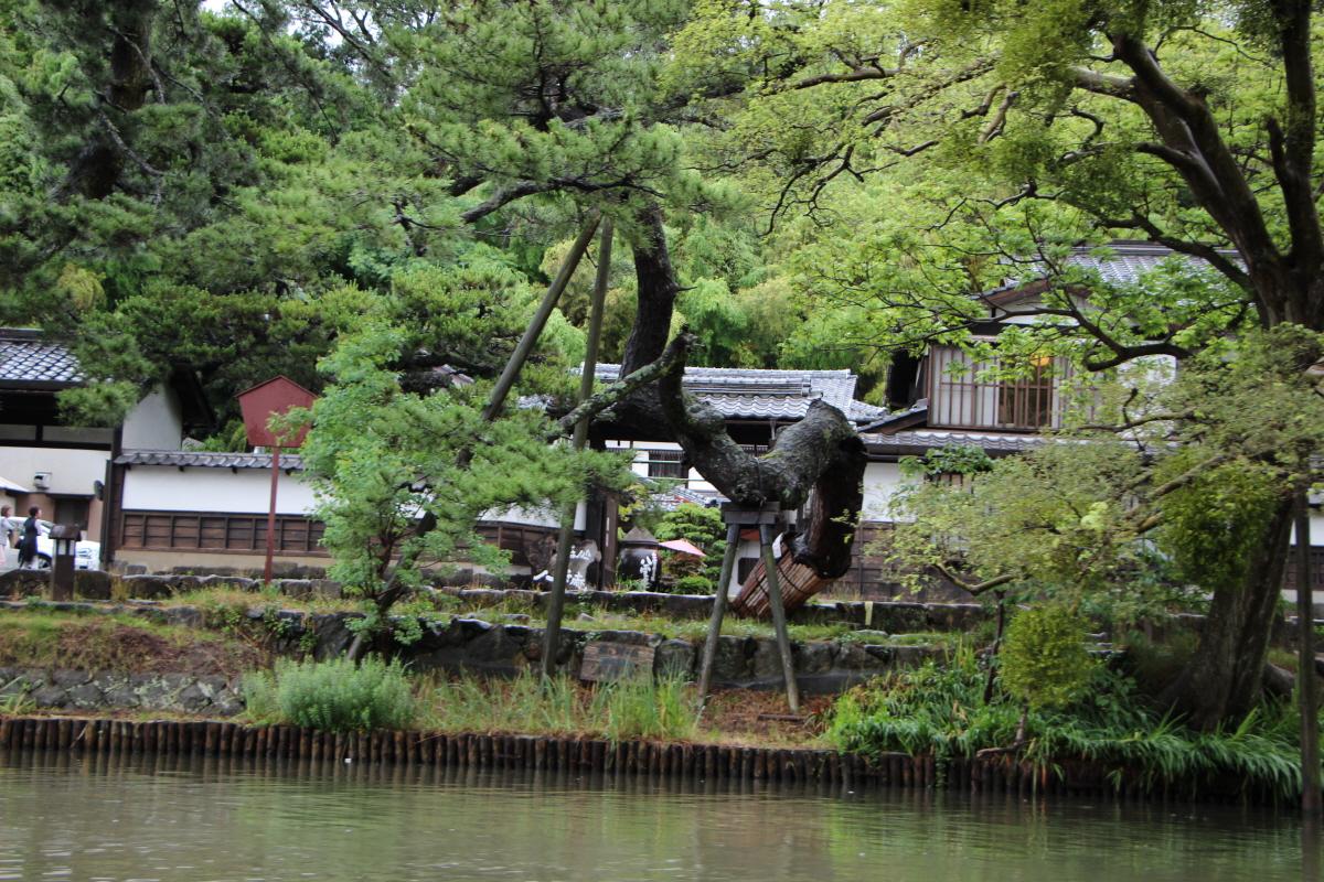 고이즈미 야쿠모 옛집과 소나무