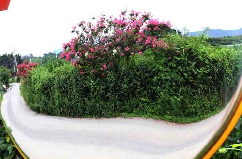 도로변 반사경에 비친 배롱나무 꽃과 도로. 명옥헌원림이 자리하고 있는 담양 후산마을 입구 풍경이다.