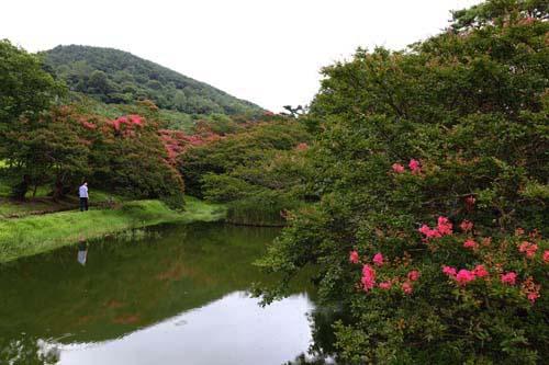 진분홍색 배롱나무 꽃이 피어나고 있는 명옥헌원림 풍경. 산그림자가 연못에 반영돼 아름답다. 지난 7월 27일 모습이다.