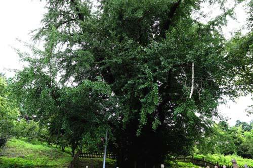 인조대왕 계마행. 명옥헌원림이 자리하고 있는 후산마을에 있다.