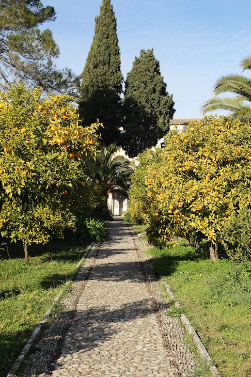 생폴드방스 수녀원 마당에 가득한 오렌지 나무들
