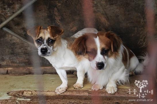 경기 양주시의 식용 개 사육장 주인만 잘 만났다면 예쁘게 살았을 개들.