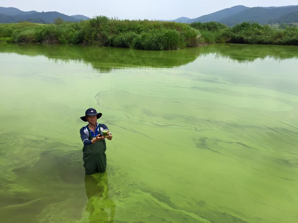 녹조의 강에 선 정수근 기자.
