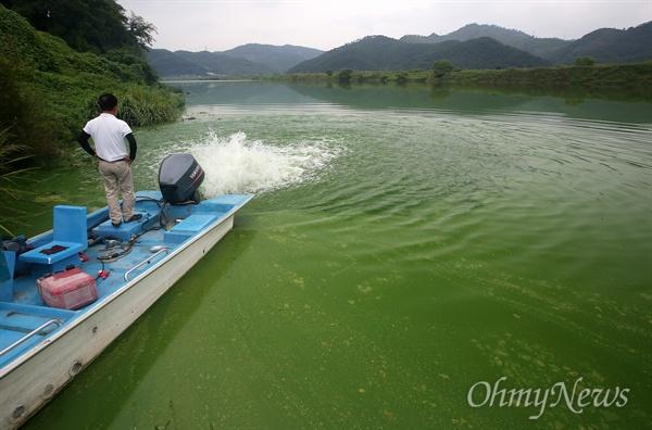 24일 오후 대구시 달성군 도동서원앞 낙동강에서 모터보트 스크류를 이용해서 짙은 녹조를 흐트리려 시도하고 있다.