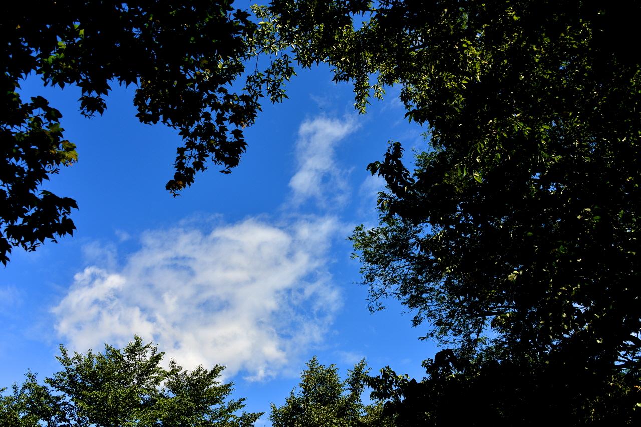 높고 푸른 가을 하늘이 가을을 성큼 느끼게 한다.