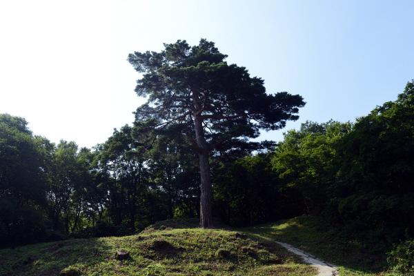 건봉사 소나무 '건봉사 소나무'란 이름을 단 이 소나무는 적멸보궁으로 가는 길목 좌측 산등성이에 자리하고 있다.