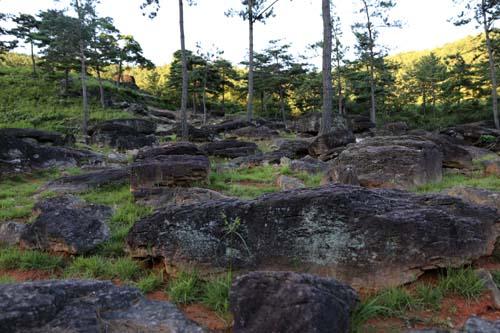 고인돌공원 곳곳에 널브러진 고인돌. 평지가 아닌 산자락에 분포돼 있는 것이 특징이다.
