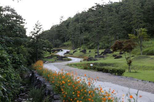 황화 코스모스와 어우러진 화순 고인돌공원. 산길을 따라 코스모스와 고인돌이 흩어져 있다.