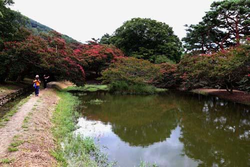 배롱나무 꽃과 어우러진 명옥헌원림 전경. 자연경관을 그대로 활용해 누정과 연못을 만들었다. 자연에 순응하는 정원이다.