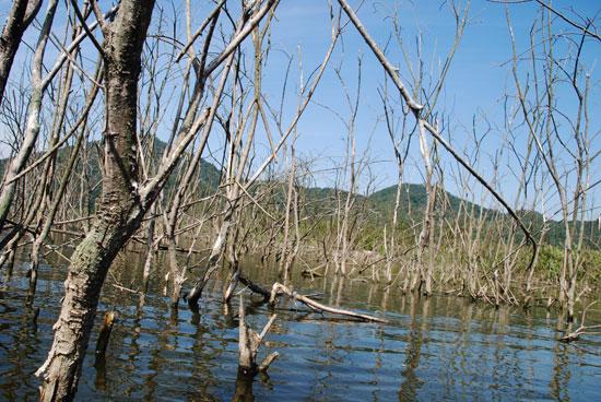 국민성금으로 구입한 투명카약을 타고 들어간 충남 공주시 쌍신공원 버드나무 군락지는 4대강 사업 이후 나무들이 고사해 버렸다.