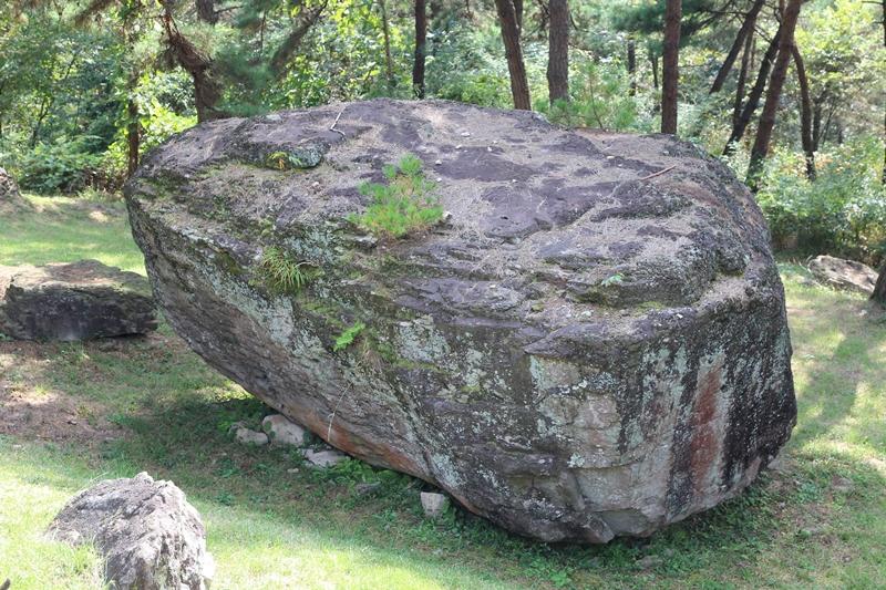 고인돌 위에서 싹을 튀워 자라고 있는 소나무 한 그루가 시선을 붙든다.