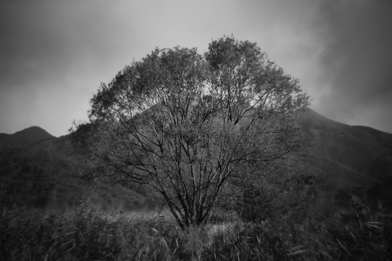 두물머리 두물머리 뒷편 북한강 쪽의 버드나무