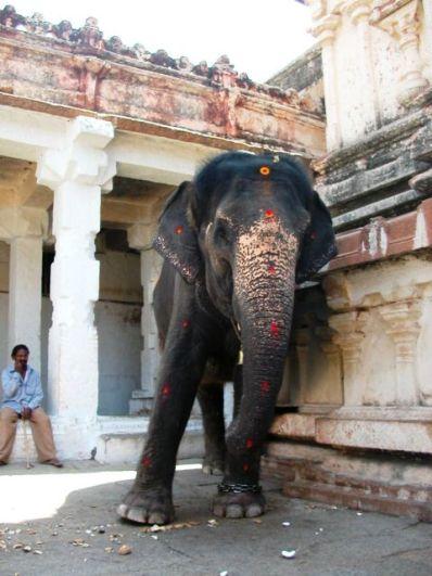 비루팍샤사원 안에서 코로 여행객의 머리를 쓰다듬는 잔재주를 보이며 푼돈을 구걸하는 코끼리. 측은했다.