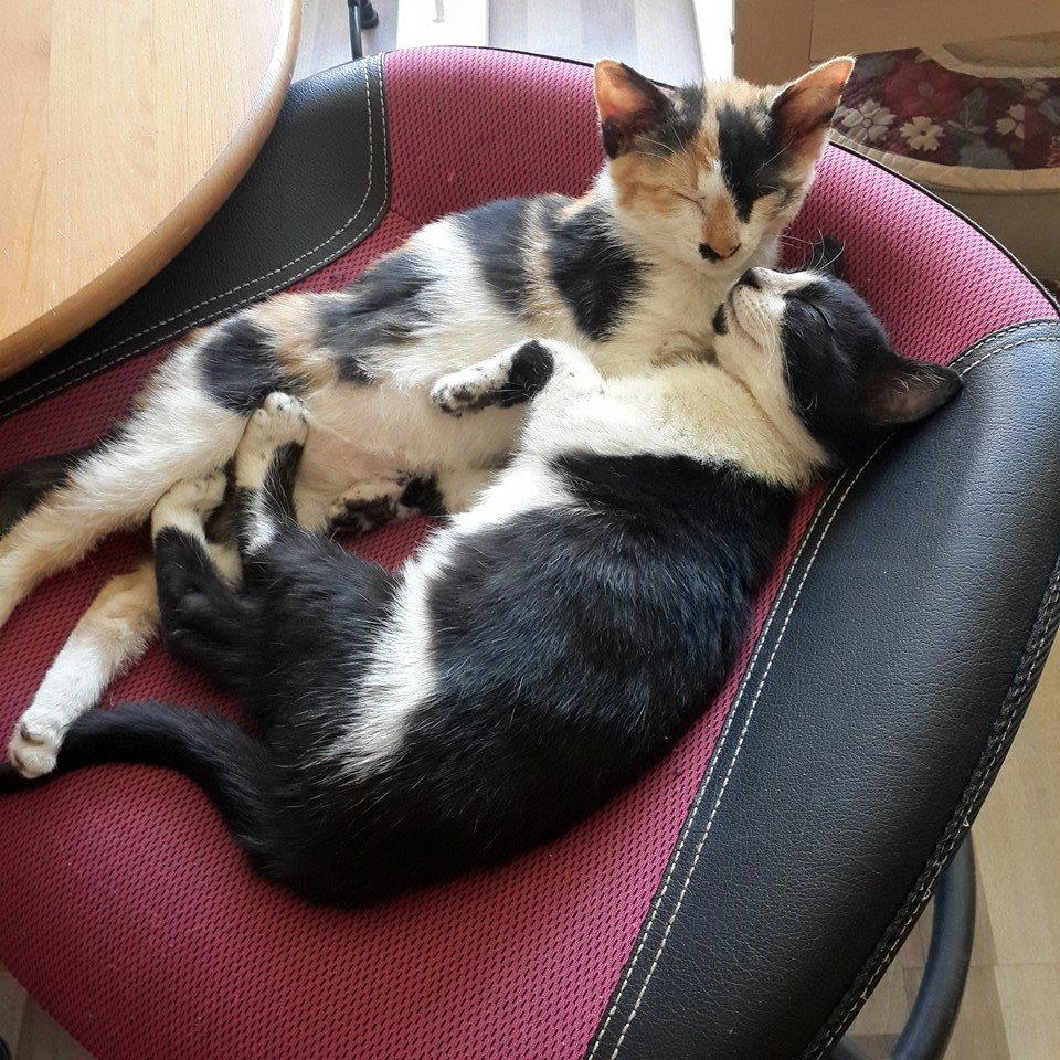 햇님과 달님 작업실에서 키우는 고양이 햇님(野翁)과 달님(夜翁).