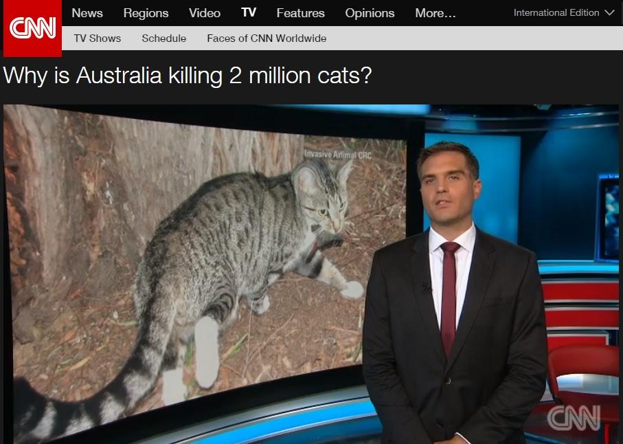 호주 정부의 길고양이 도살 정책 논란을 보도하는 CNN 뉴스 갈무리.