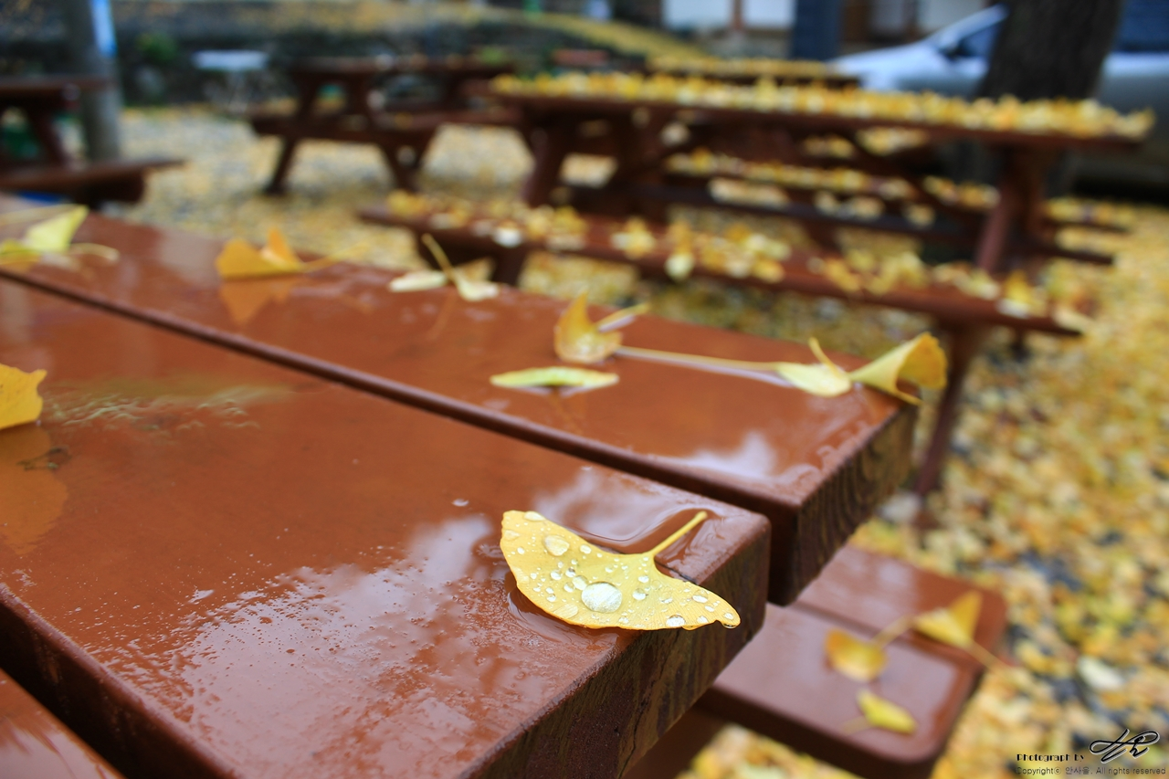 촉촉히 젖은 은행잎 <디지털>가을 벤치에 사람 대신 은행잎이 앉아있다.