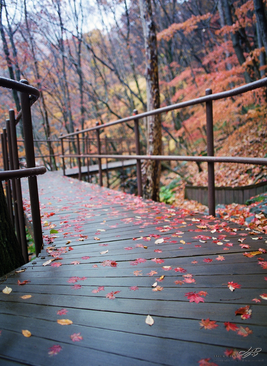 가을 흔적 <필름>데크를 수놓은 빨간 단풍이 가을의 밝자국 같다.