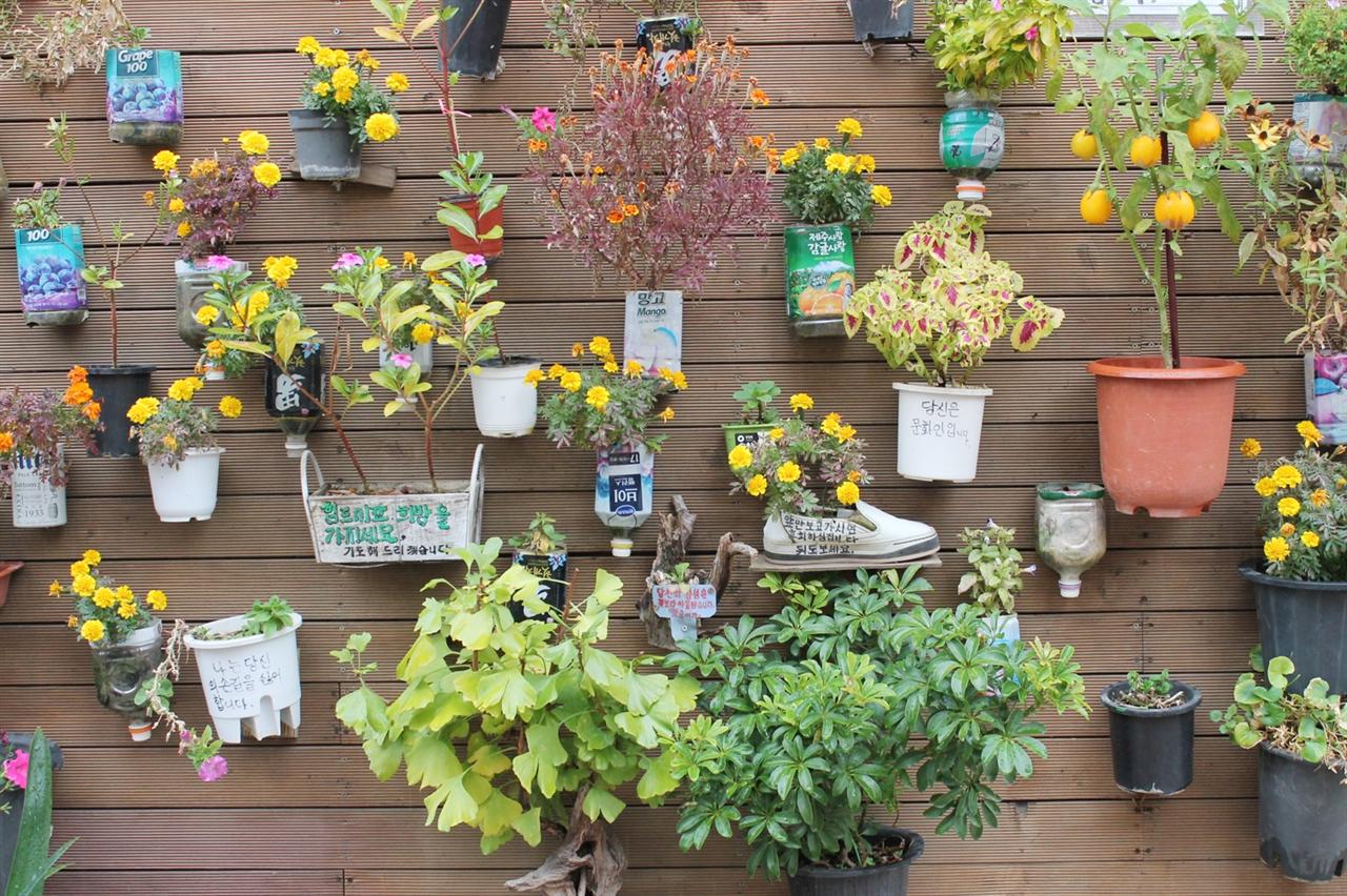 행궁동 길 벽에 걸린 정원 누가 벽에 다 꽃을 심어 걸어 놓을 생각을 했을까? 좋은 것들은 얼른 따라해봐야 한다.