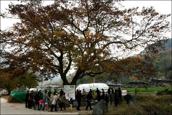 저자를 비롯한 마을사람들의 정성으로 치료를 받아 여름이면 풍성한 그늘을 다시 줄 수 있을 정도로 건강해진 마을의 정자나무가 제13회 풀꽃상을 받던 날 마을사람들이 둘레를 돌고 있다.