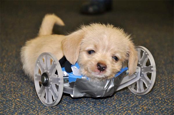 휠체어 적응 훈련 중인 텀블스
