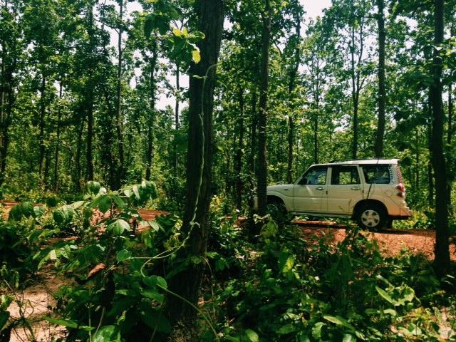 어딘가에 코끼리가 없을까 계속 두리번 거렸던 소나무키 숲(Sonamukhi Forest)