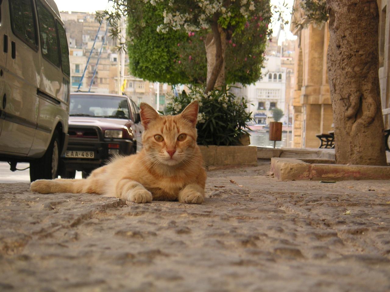 몰타에는 아프거나 보호가 필요한 고양이들을 돌보는 고양이센터 National Cat Society Thomasina Cat Sanctuary 가 있다. 자원봉사를 희망하는 사람도 참여가 가능하다.   www.maltesecats.2kat.net (사진 제공=몰타관광청)