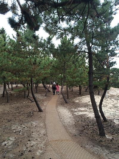 송정 소나무 숲 소나무 숲 사이를 걸을 수 있는 오솔길이 나 있다.