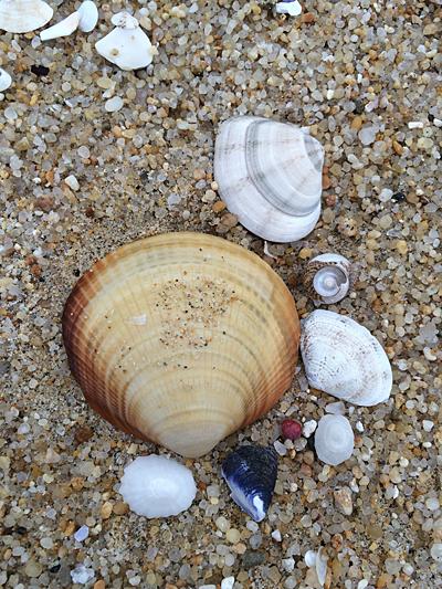 다양한 크기의 조개껍데기를 주워 유리병에 담으면 예쁜 장식품이 된다.