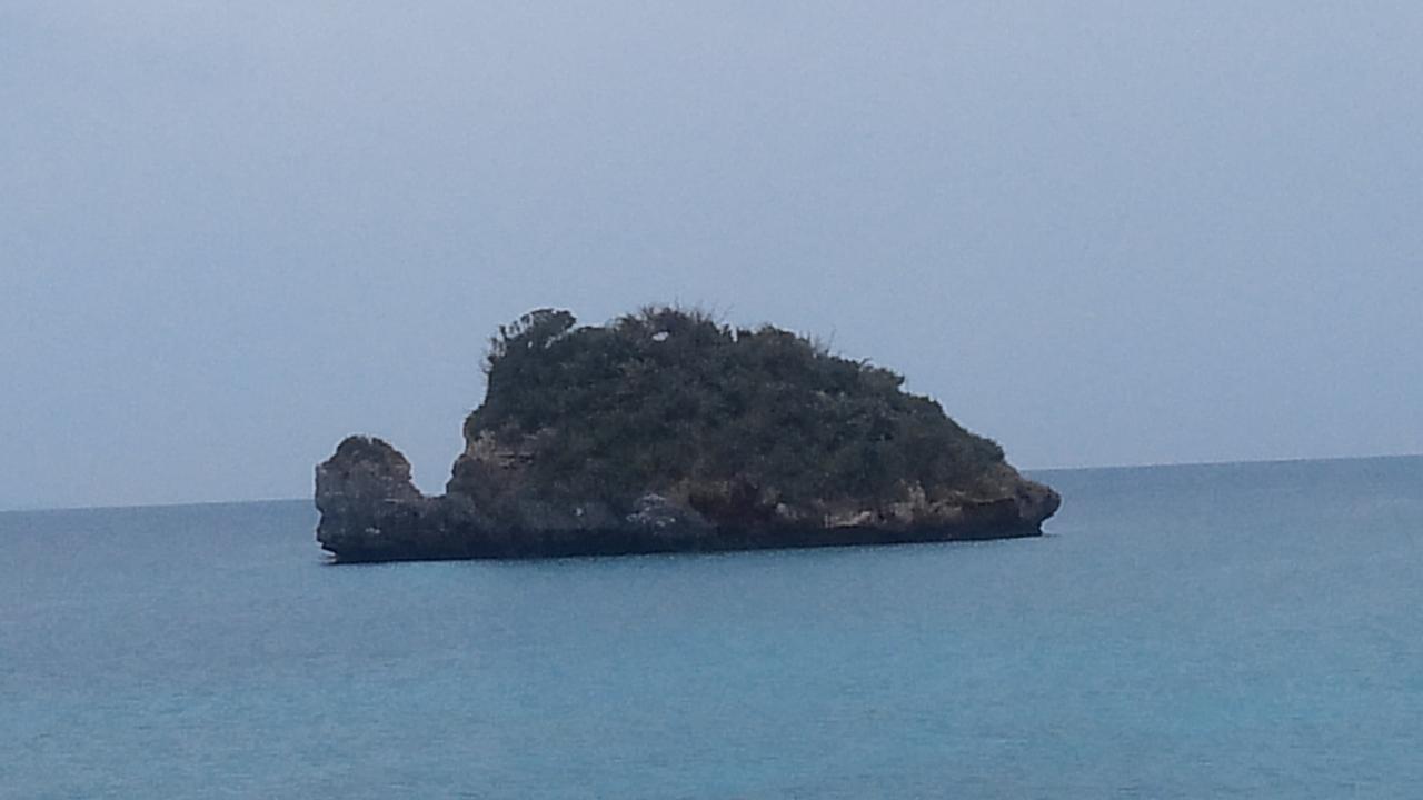 거북이 모양을 한 섬이 눈앞에 있다.