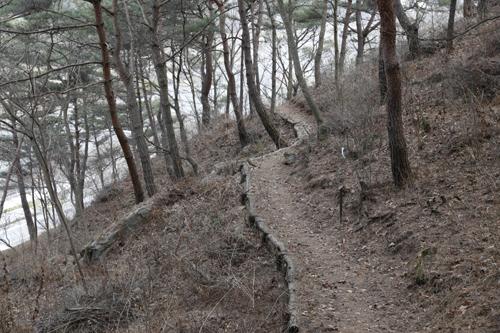 섬진강변을 따라 숲으로 흘러가는 섬진강 둘레길. 왼편으로 섬진강과 강변 풍광이 펼쳐진다.