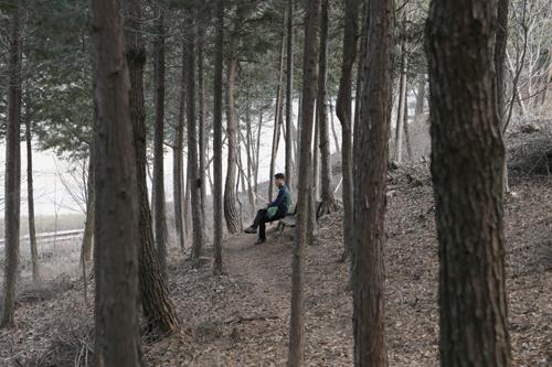 섬진강 둘레길에서 만나는 편백숲. 면적은 넓지 않지만, 강변 풍광을 감상할 수 있어서 더 좋다.