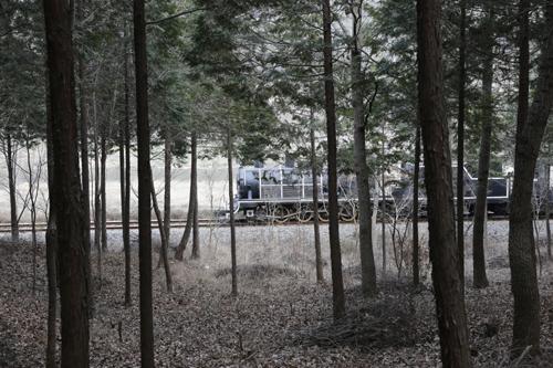 편백숲 사이로 증기기관열차가 지나고 있다. 그 너머로는 국도와 섬진강이 지난다.