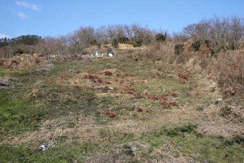 진도주민들이 만든 일본군의 무덤인 왜덕산. 명량에서 이순신 장군과 조선수군에 의해 수장된 일본군의 시체가 바닷가에 밀려들자 주민들이 이를 거둬 여기에 묻어 주었다.