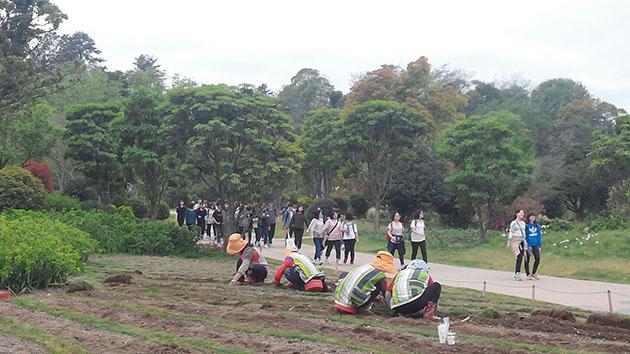 순천만 정원을 찾은 단체 관람객들과 순천만 정원의 꽃과 잔디를 관리하는 일용직 노동자들의 모습