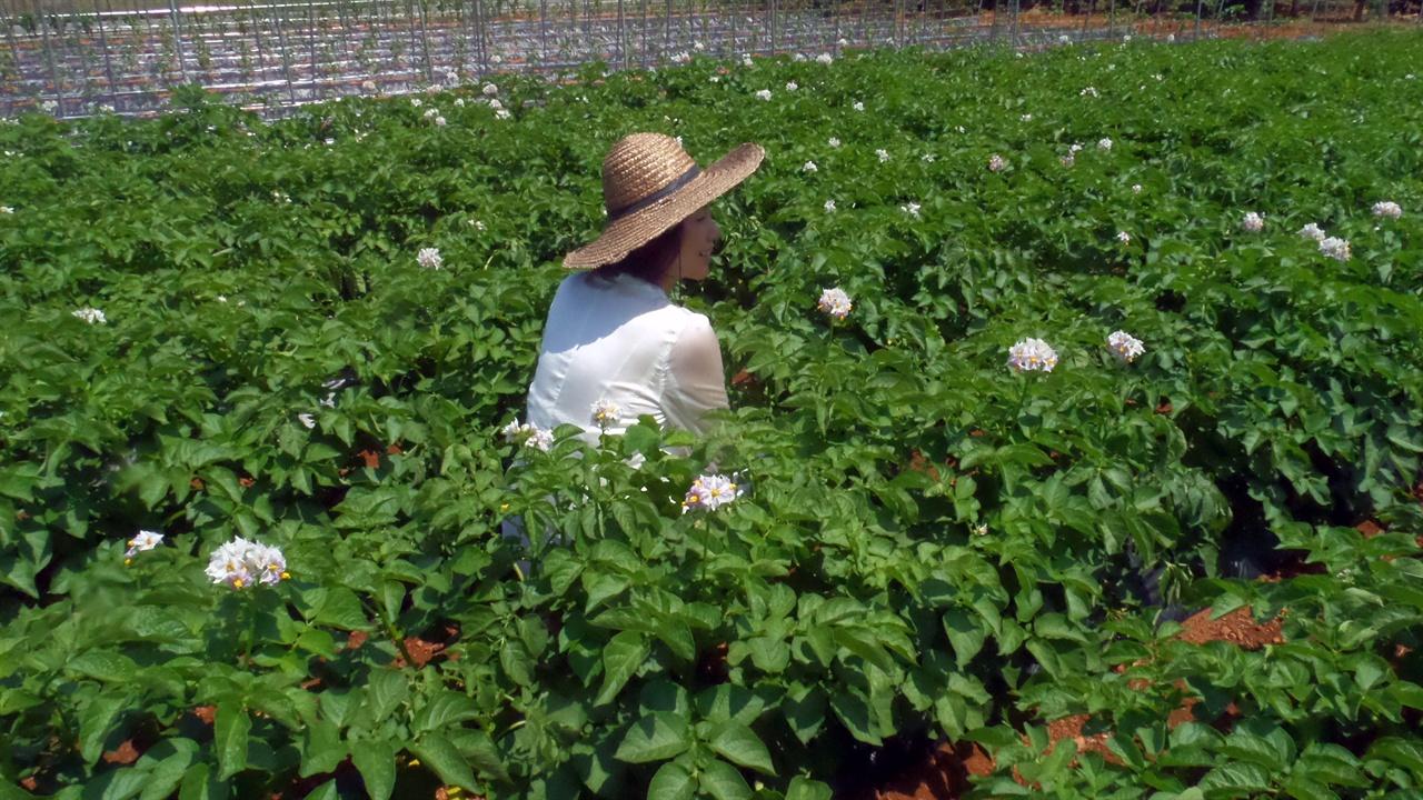 꽃이 핀 감자밭에서 아내가 망중한을 즐깁니다.