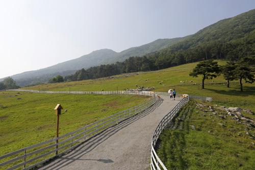 무등산 양떼목장 전경. 양떼가 노니는 초원 사이로 여행객들이 다닐 수 있는 길이 예쁘게 나 있다.