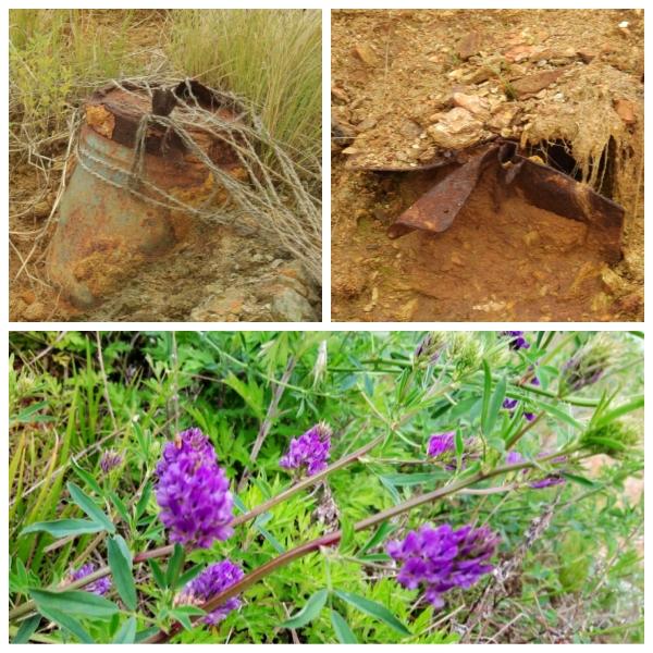 농섬에 박힌 포탄 농섬은 죽음의 땅이었다. 환경정화작업을 했고 계속적으로 예정되어 있지만, 54년간 받아낸 포탄은 아직도 곳곳에 박혀 있었다. 풀과 꽃이 자라고 물새가 번식함으로 이젠 생명을 품은 땅이 되었다. 사진의 꽃은 농섬에 피어난 자주개자리꽃.