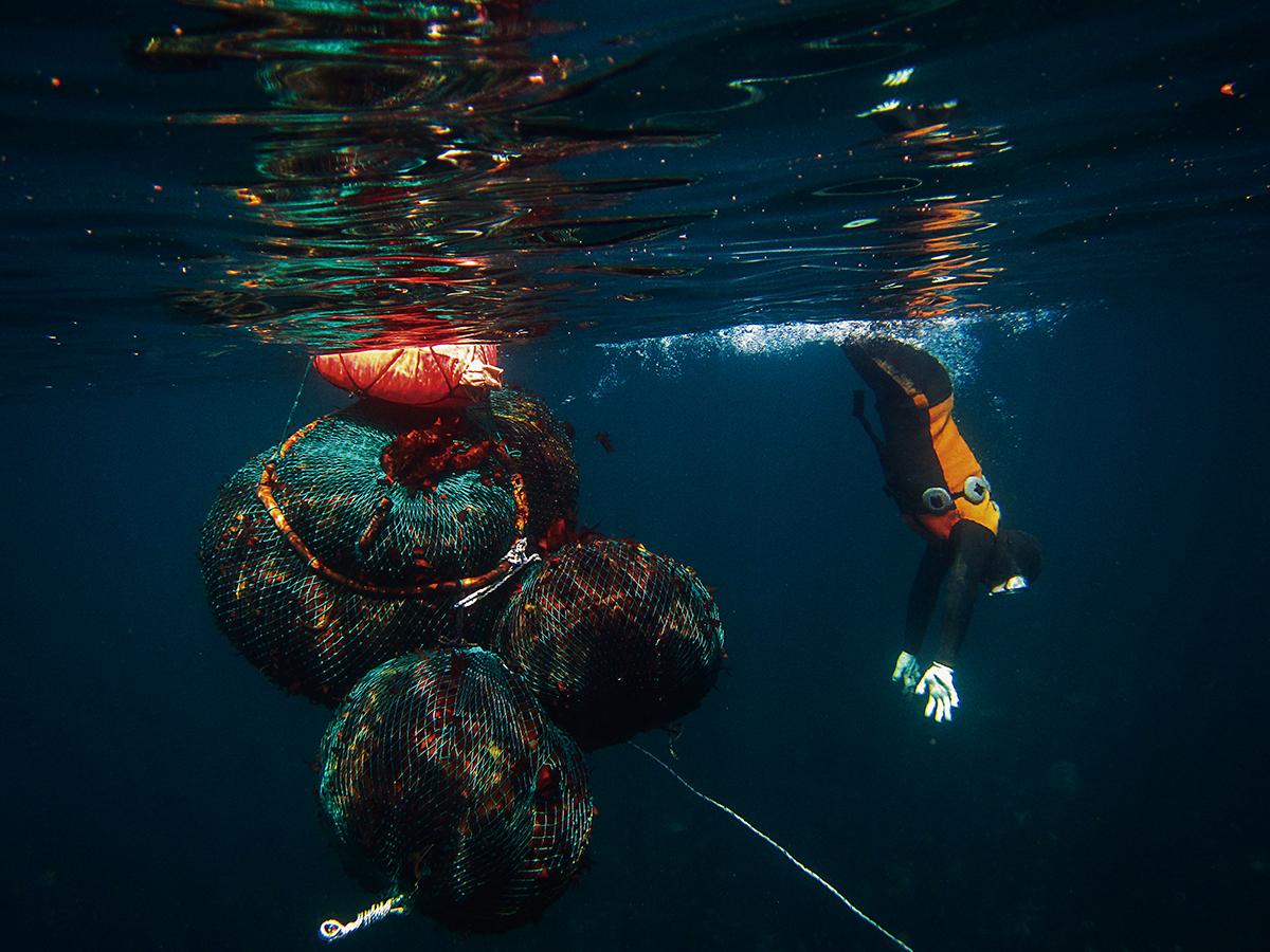 해녀들 삶의 터전인 바다에 대한 해녀의 애정은 상상을 초월할 정도이다.