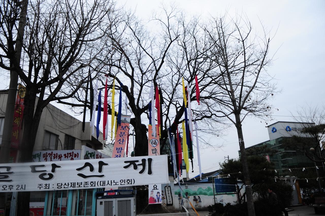 3월 당산제를 진행한 마을의 나무 당산제를 크게 지내며 홍보하고 있다.