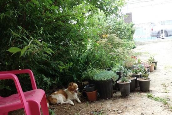화살나무 그늘아래에서 쉬고 있는 반려견