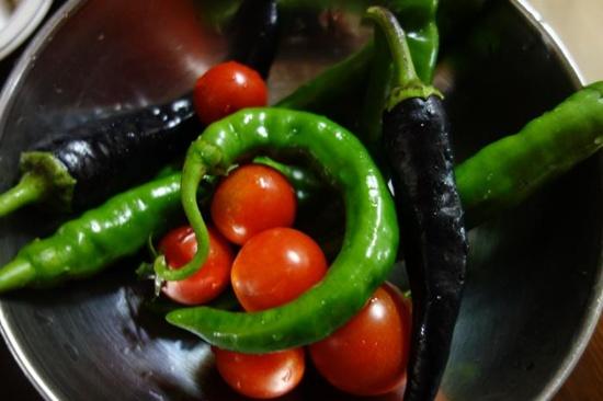텃밭에서 수확한 토마토, 고추, 가지고추