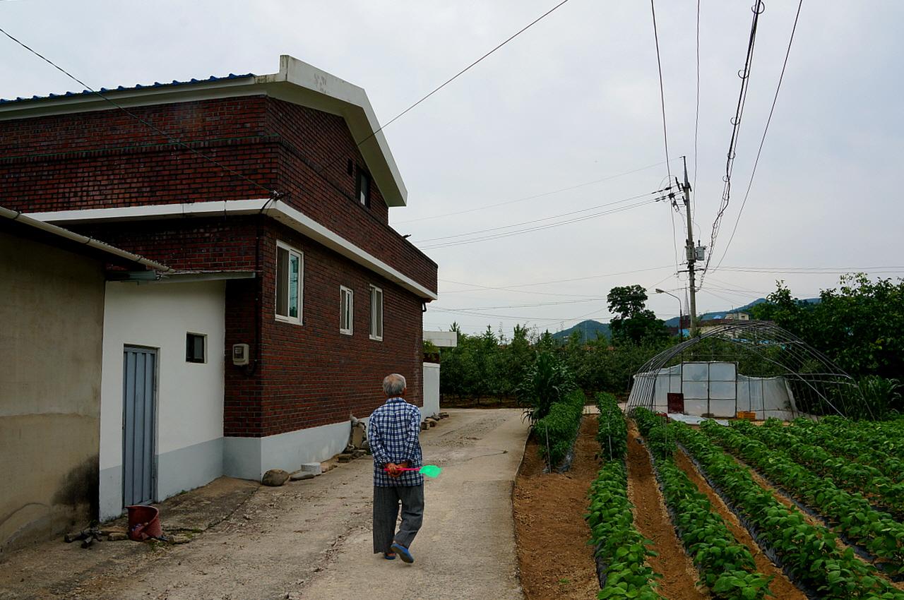 덕계리 마을 길 고동색벽돌집이 박효일선생 집이다. 그의 할아버지는 독립운동을 하였고 청송에 처음으로 사과묘목을 들여와 현재 청송사과를 있게 한 분이다..