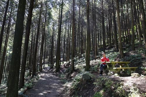 무등산편백휴양림의 편백숲에는 군데군데 쉴 수 있는 의자가 놓여 있다. 부러 걸을 필요 없이, 의자에 앉아있는 것만으로도 힐링이 된다.